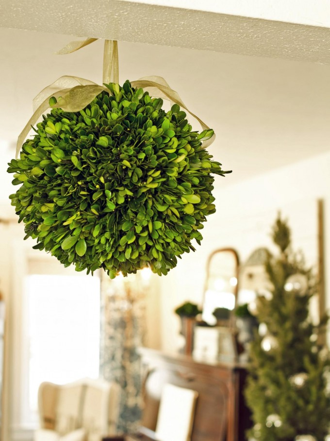 Hanging Preserved Boxwood In Round Design With Cream Ribbon For Home Accessories Ideas