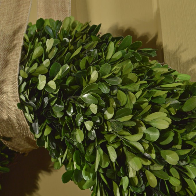 Large Preserved Boxwood Wreath For Home Plant Ideas