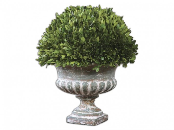 Preserved Boxwood On White Decorative Vase For Home Accessories Ideas