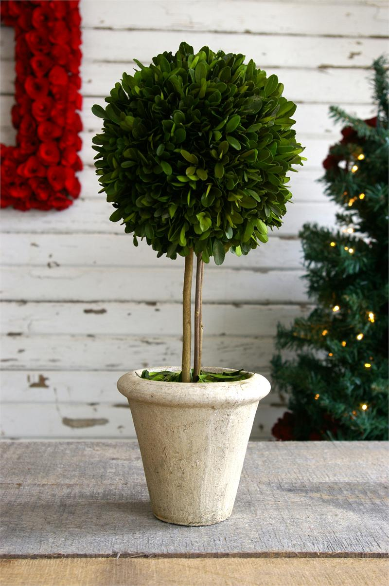 Preserved Boxwood Single Ball Topiary 16 Inch On White Vase For Home Accessories Ideas