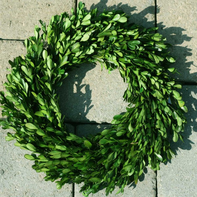 Preserved Boxwood Wreath 14 Inch In Circle Design For Home Accessories Ideas
