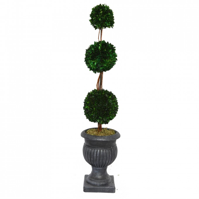 Triple Ball Preserved Boxwood On Gray Vase For Home Accessories Ideas