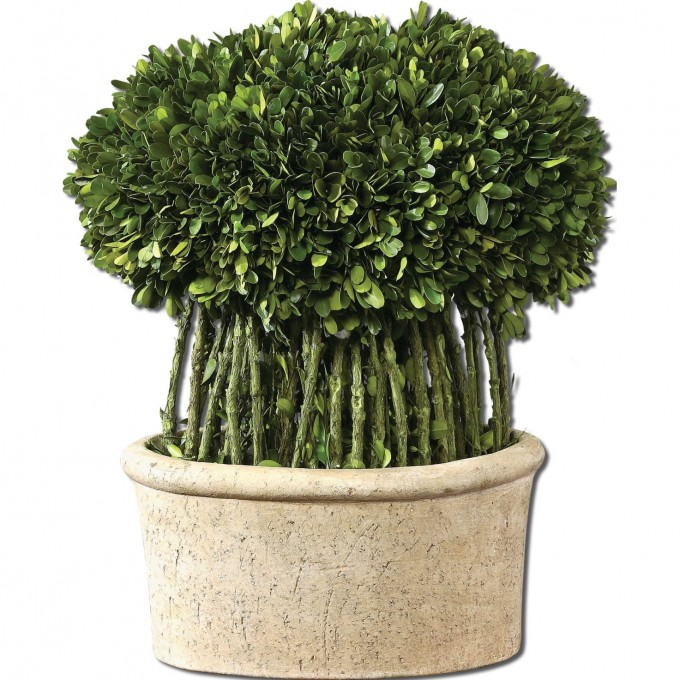 Uttermost Globe Preserved Boxwood Decorative Plant For Home Accessories Ideas