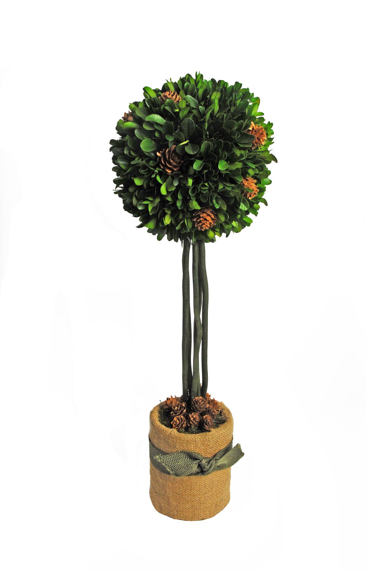 Wonderful Preserved Boxwood In Round Design On Vase With Ribbon For Home Accessories Ideas