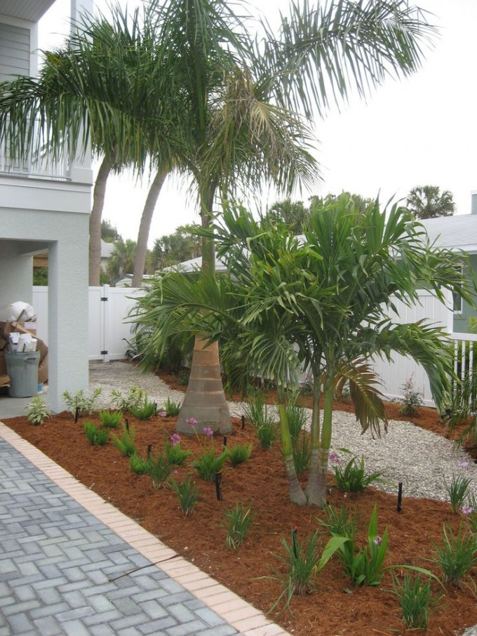 Awesome Robellini Palm Tree And Paver For Home Landscaping Ideas