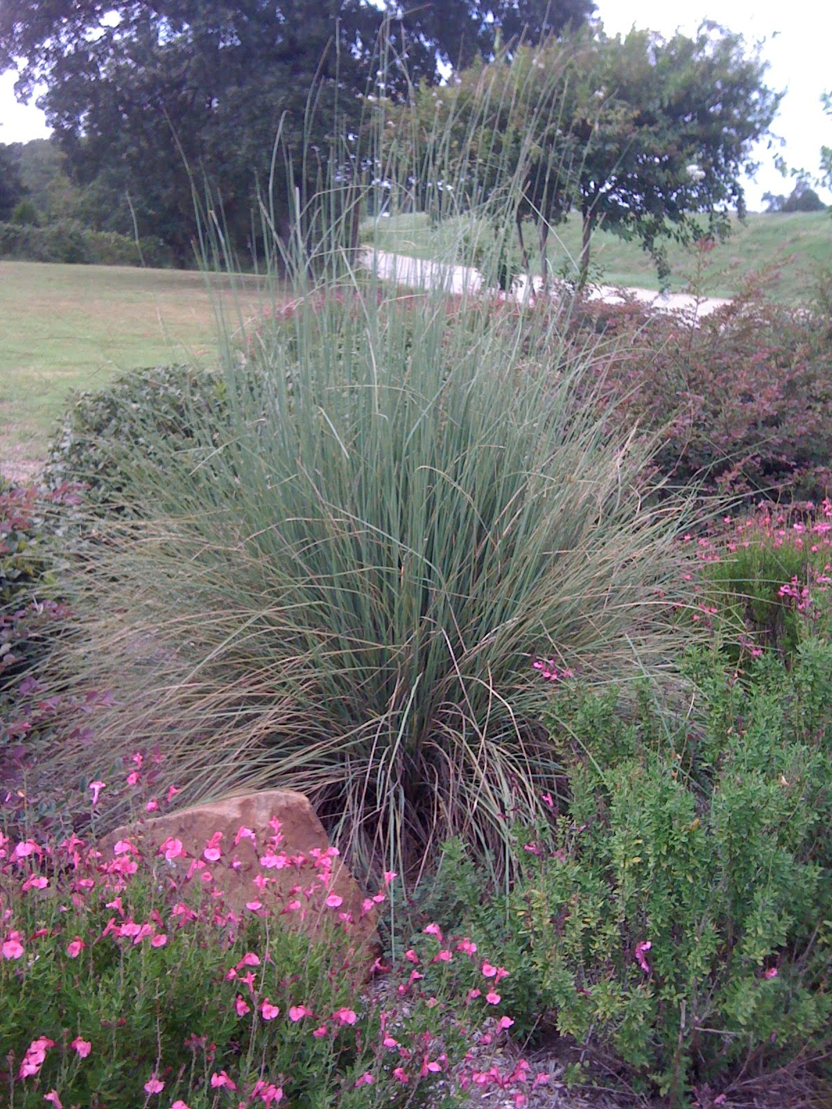 cute pink muhly grass with other plants for garden plant ideas