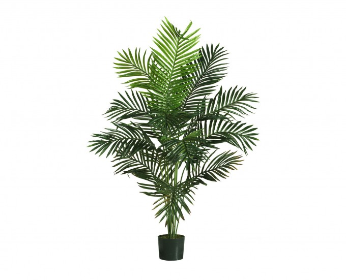 Small Green Robellini Palm Tree On Black Pot For Home Yard Ideas