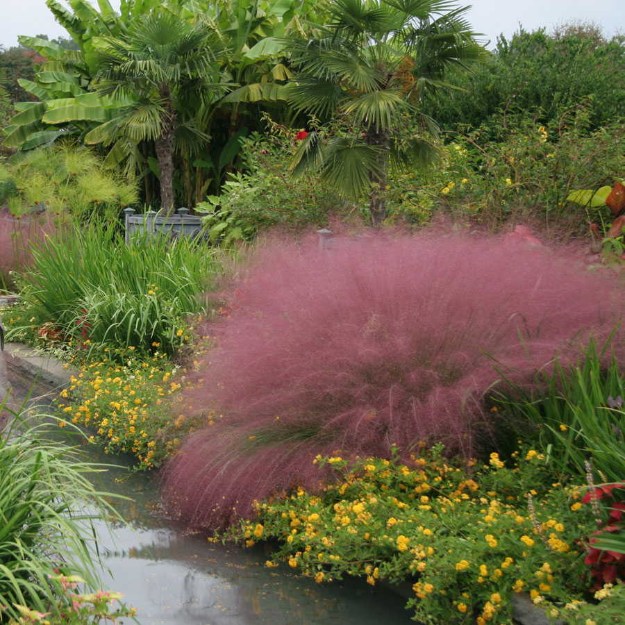wonderful pink muhly grass and other awesome plant plus decorative edging for garden decor ideas
