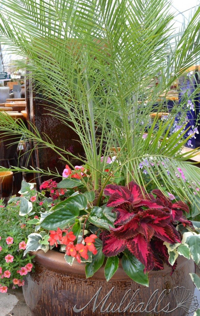 Wonderful Robellini Palm Tree And Orange Flower On Brown Pot For Home Landscaping Ideas